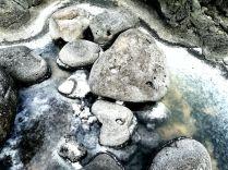 ecosistema salino